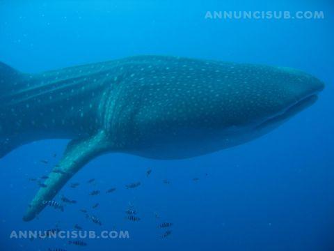 Varie offerta diving sharm el sheikh annunci sub - Dive per sempre ...