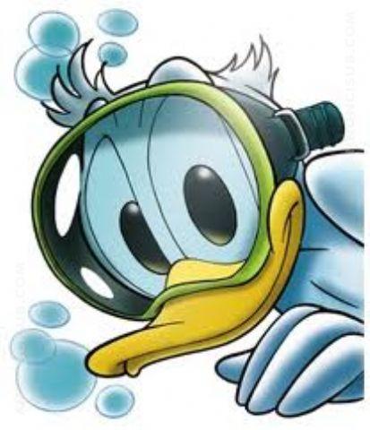 Cerco attrezzature sub o snorkeling gratis annunci sub for Regalo offro gratis